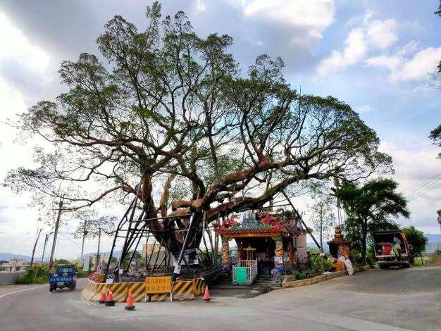 老榕樹目前完成階段性搶救作業,未來仍有三年的照料復診,確保老榕樹恢復生機。