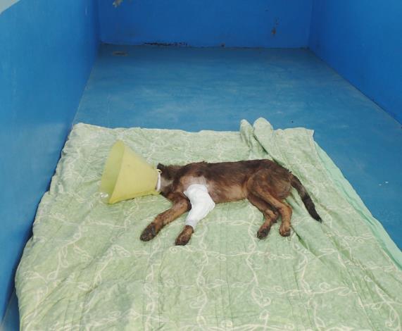 動物收容所如戰場,動物醫療如戰爭(共2張)