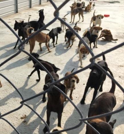 苗栗縣動物保護防疫所 108年度私人收容所輔導(共2張)