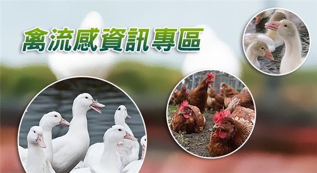 [另開新視窗]行政院農委會禽流感資訊專區