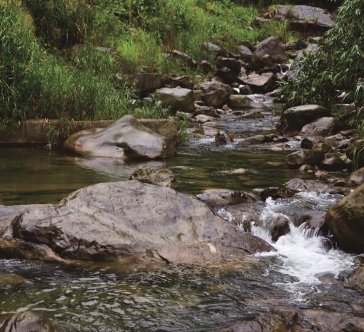 八卦村護溪生態
